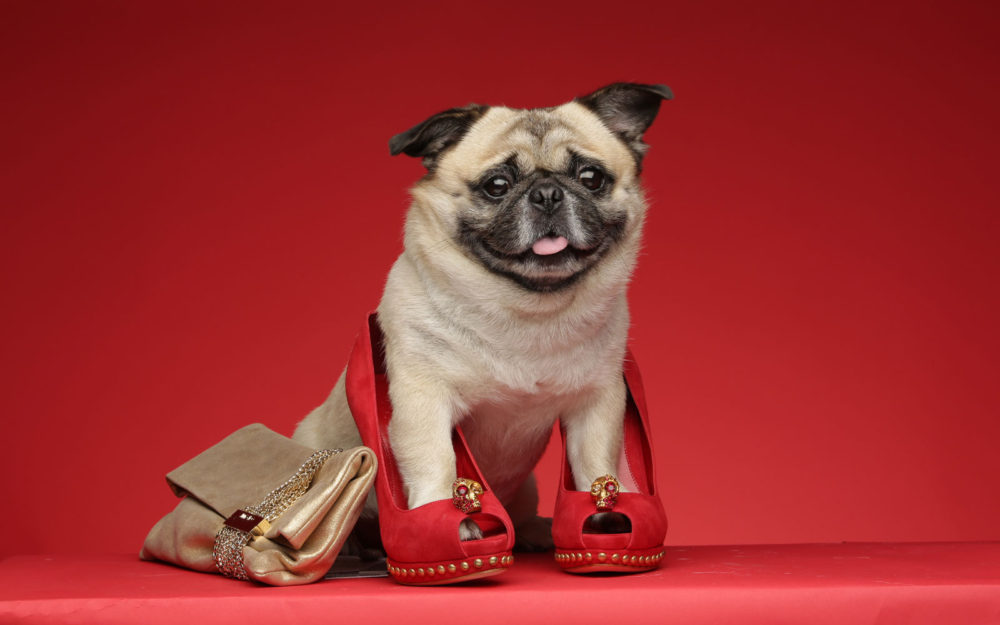 Glamour Sales Glamdog Commercial Wardrobe Stylist Shanghai China